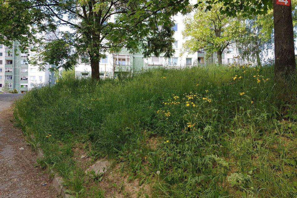 Považskobystričania sa sťažujú: Rozkvet zarastený trávou