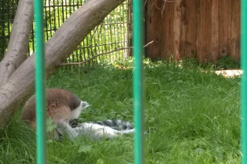 Pozrite si ich na FOTKÁCH: V novoveskej zoo pribudli noví obyvatelia