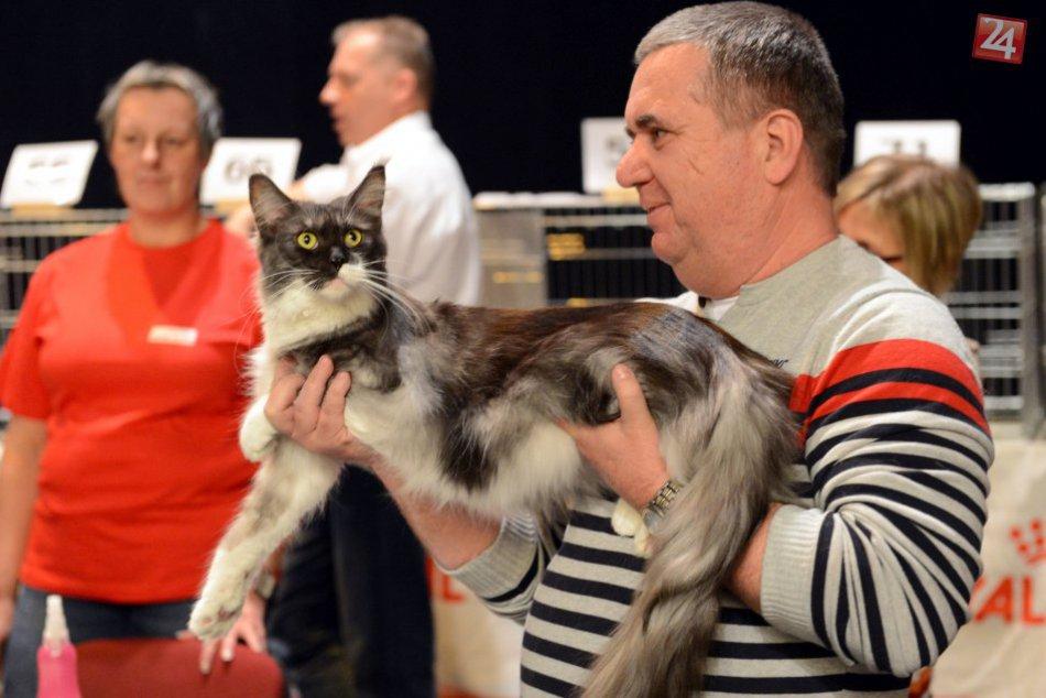 V OBRAZOCH: Výstava mačiek