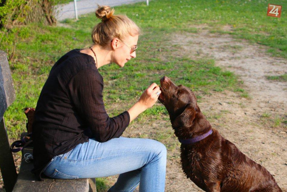 Psičkári a psy