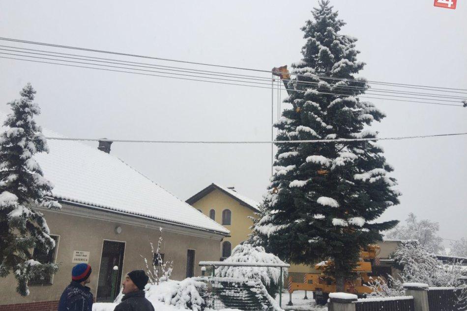 Považskobystrický vianočný stromček: Takto vyzerala jeho púť z Jasenice