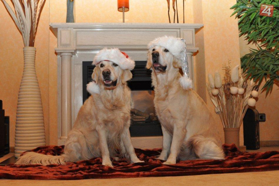 Darčeky pre psíkov