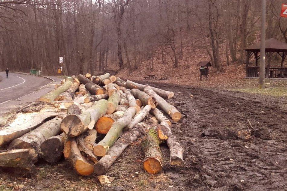 Bratislavské lesy - odstraňovanie dreva