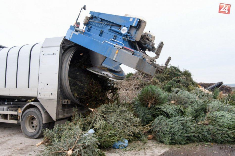 Zber vianočných stromčekov v Nitre je v plnom prúde: Vyrobí sa z nich kompost
