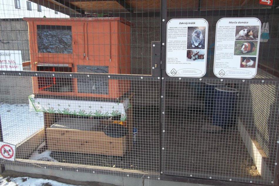 FOTO: Zvieratkám sa vo dvore páči, obľúbili si ho aj mačičky