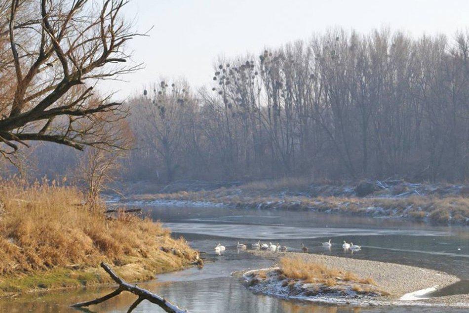 Národný park Dunajské luhy v zime