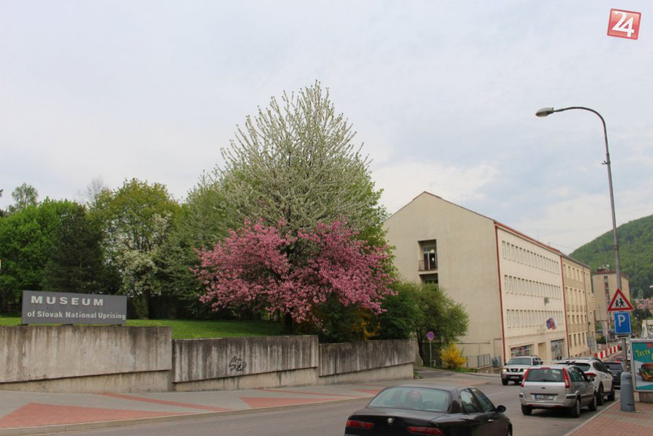 V OBRAZOCH: V centre Bystrice rozkvitol dvojfarebný strom