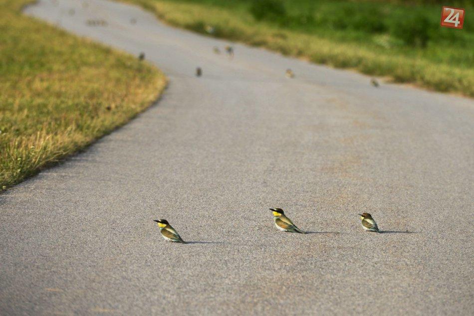 Vzácne vtáky v Bratislave