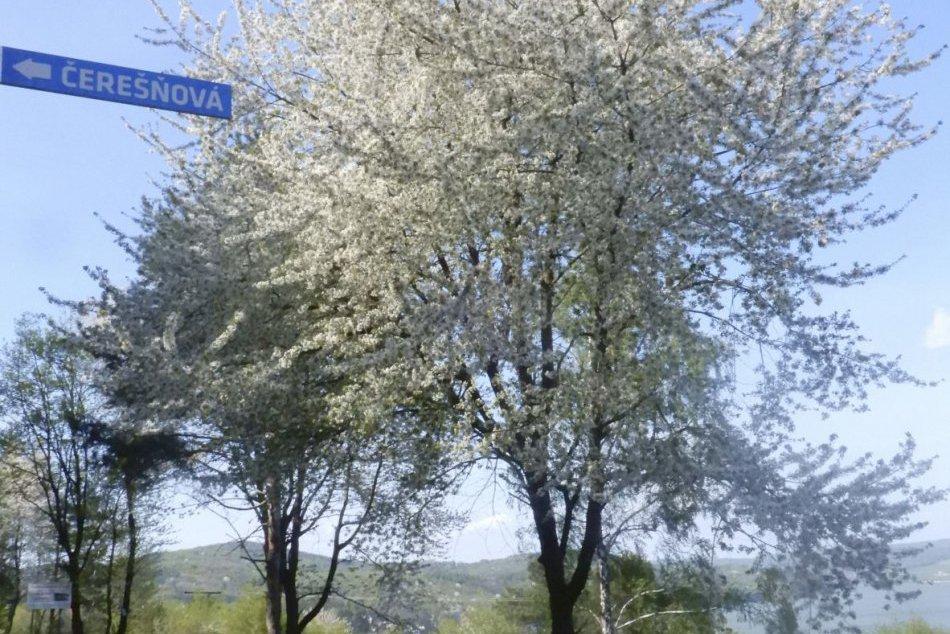 Názvy ulíc v rekreačnej oblasti na Domaši vybrali aj miestni obyvatelia
