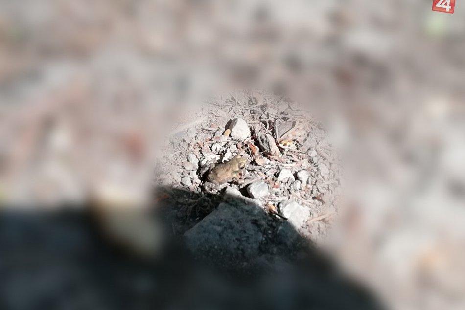 Zachytené v obrazoch: Na takéto úkazy môžete naraziť pri Vinianskom jazere