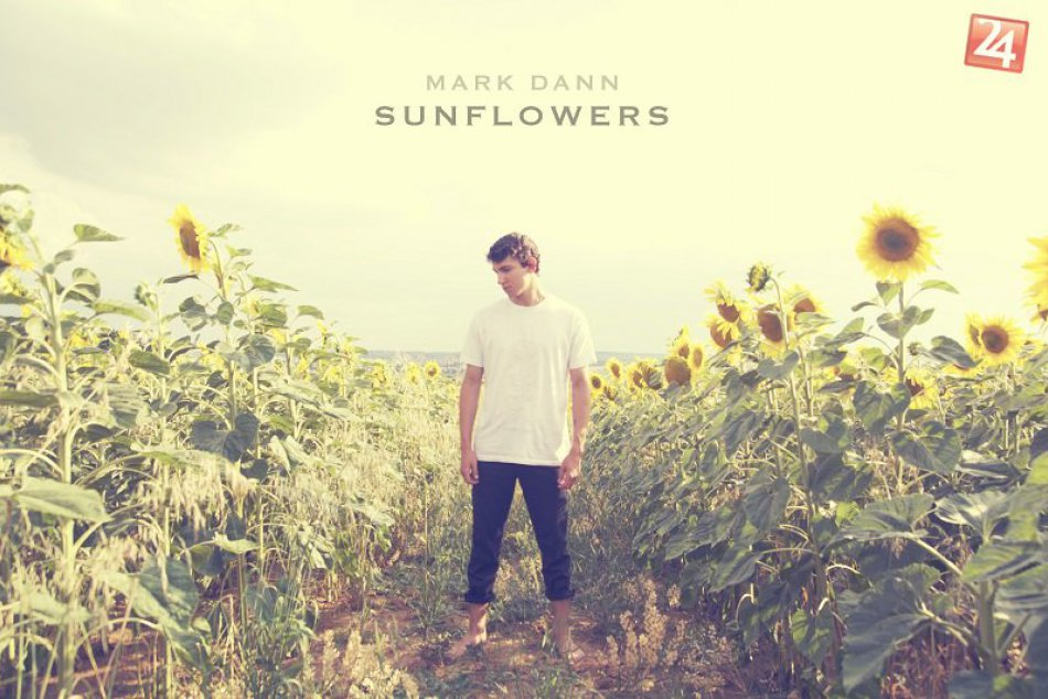 Mark Dann Sunflowers