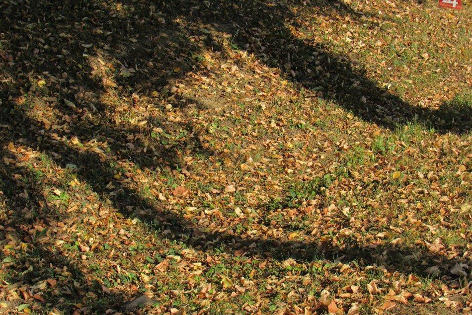 V Prešove je mimoriadne sucho: Nejedno miesto pripomína jeseň
