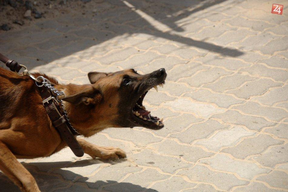 Krvavý útok: Dvaja psy sa vrhli na muža (59) s kočíkom