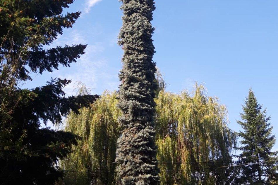 Netradičný strom na štadióne vzbudzuje u ľudí pozornosť