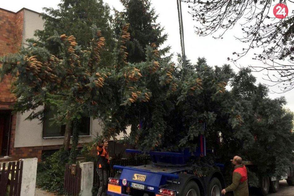 Vianočný stromček na Hlavnom námestí
