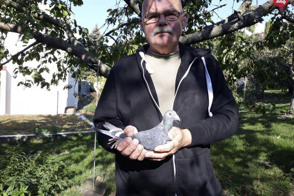 V minulosti vyšetroval zavlečenie prezidentovho syna, dnes chová holuby
