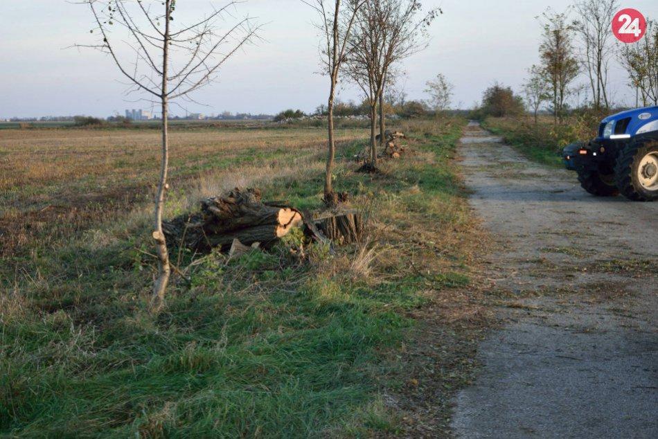 V Šuranoch zmizla stovka stromov: Nelegálny výrub spôsobil škody za desiatky tis