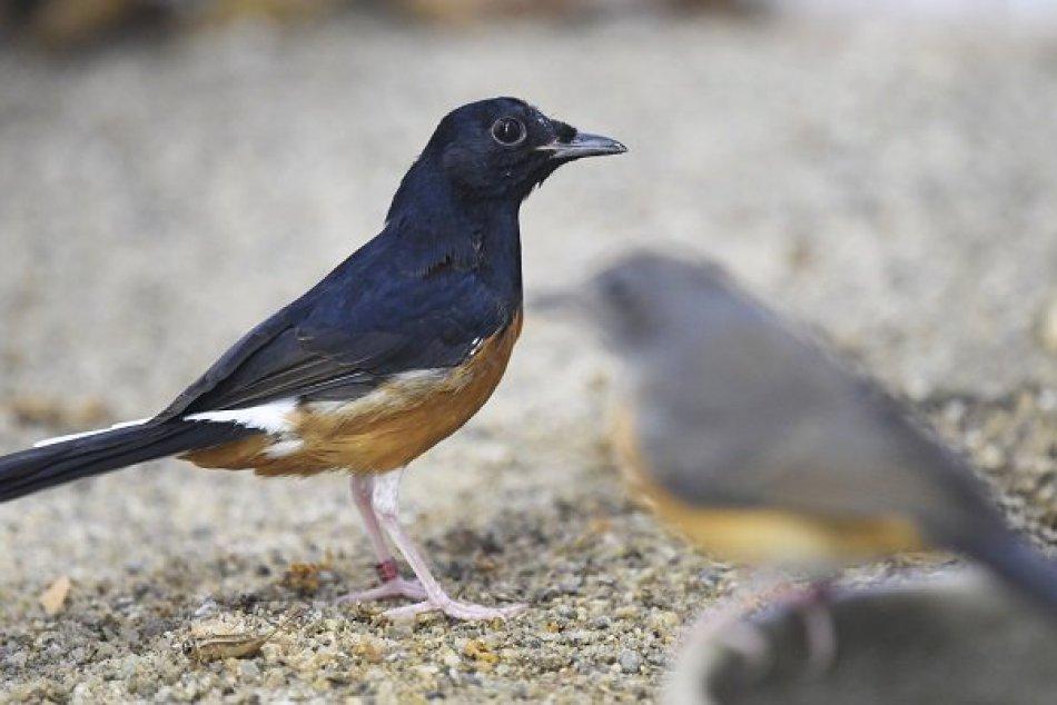 Video veľké vtáky