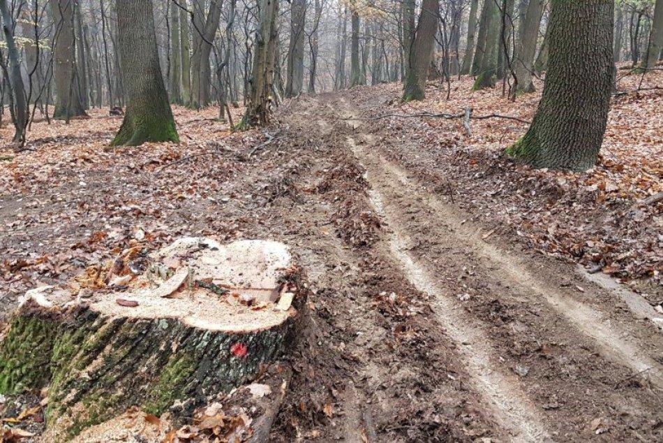 Ťažba v lesoch