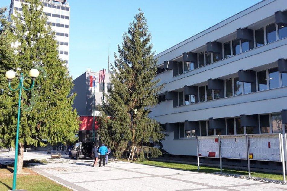 Vianočný stromček v Považskej už stojí: Ide o tento 16-metrový smrek