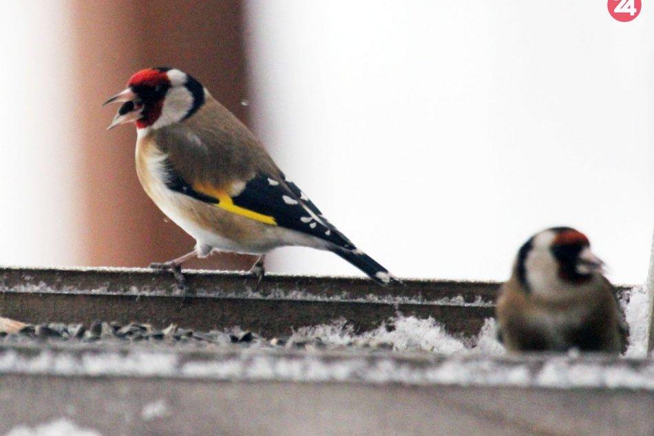 Prikrmovanie vtáctva počas zimy