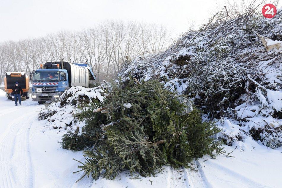 V Nitre začali so zberom vianočných stromčekov: Končia v kompostárni, FOTO