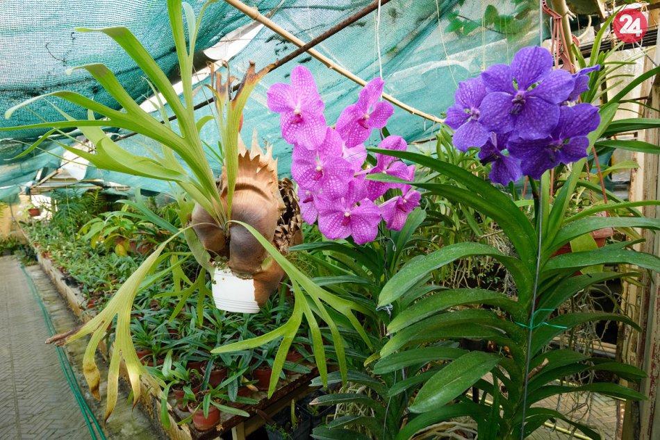 Orchidey v botanickej záhrade v Nitre