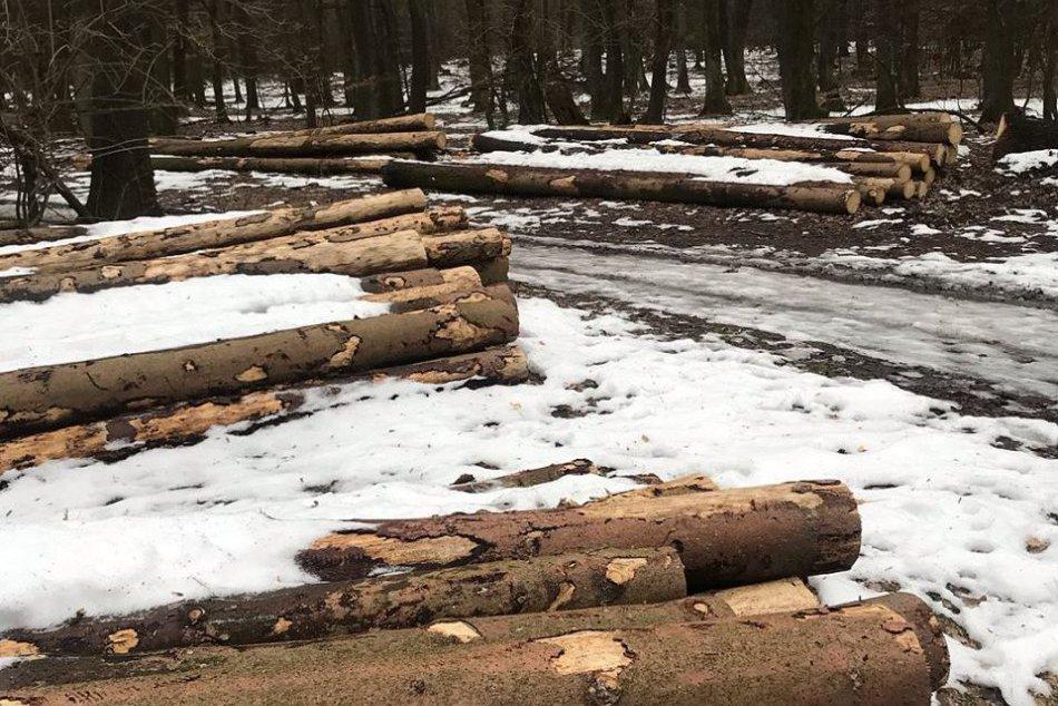 Lesy v okolí Bratislavy treba chrániť