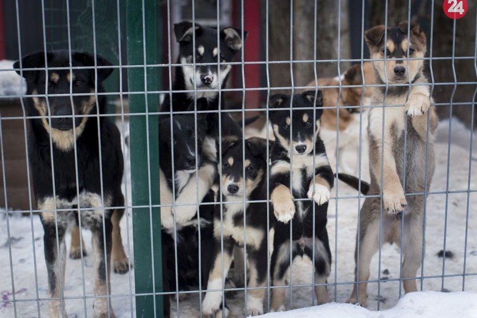 Túlavé psy v Litve
