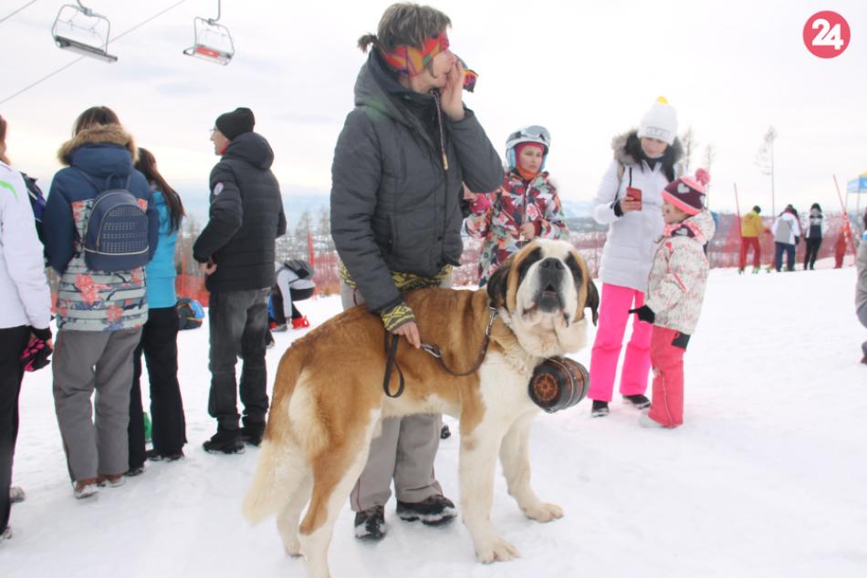 Pod Lomnický štít opäť zavítali snežné psy
