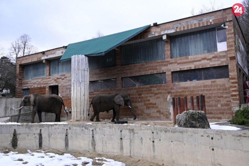 Slonice Maja a Gula dostanú nový domov