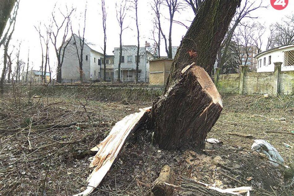 V okolí starej nemocnice došlo k výrubu desiatok stromov