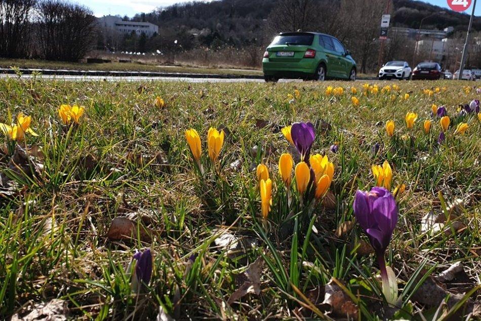 Jarné kvety v Dúbravke