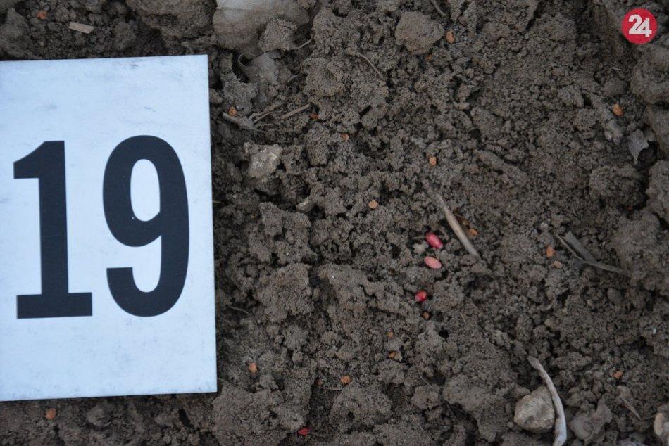 Na polia niekto rozsial otrávené osivo: Zahynuli desiatky zvierat
