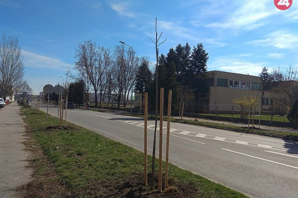 Dobrovoľníci vysadili v Nových Zámkoch ďalších 40 stromov