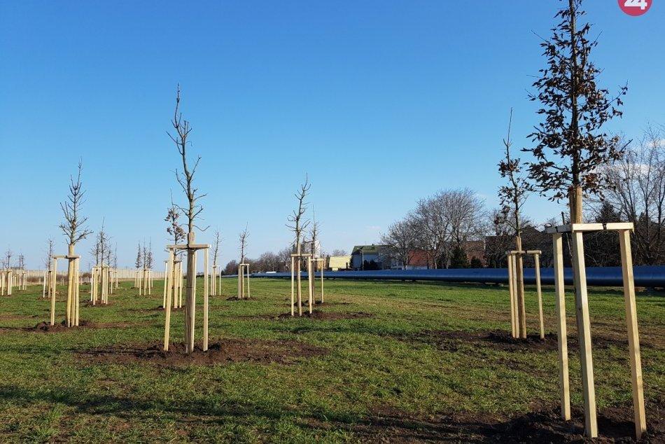 Výsadba stromov na Sibírskej ulici