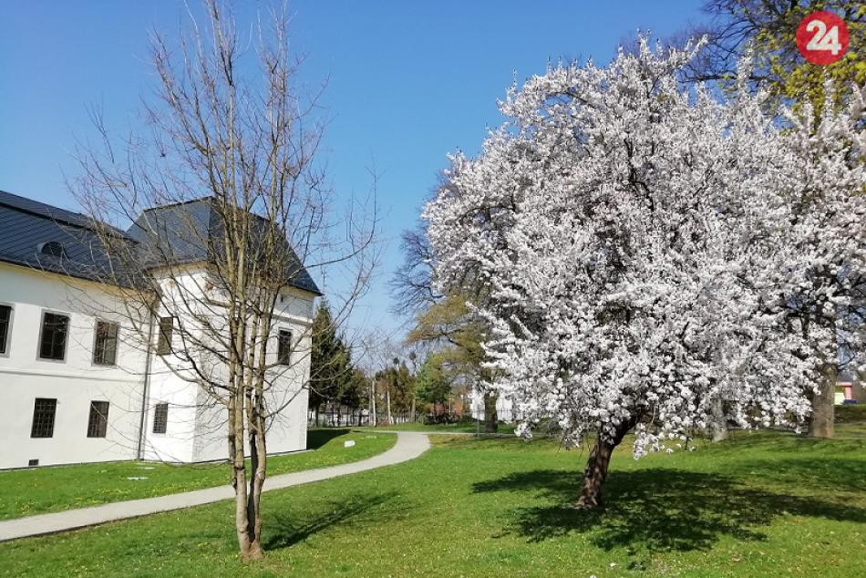 V Humennom sa už udomácnila jar: Aj takéto pekné výjavy v našom meste ponúka