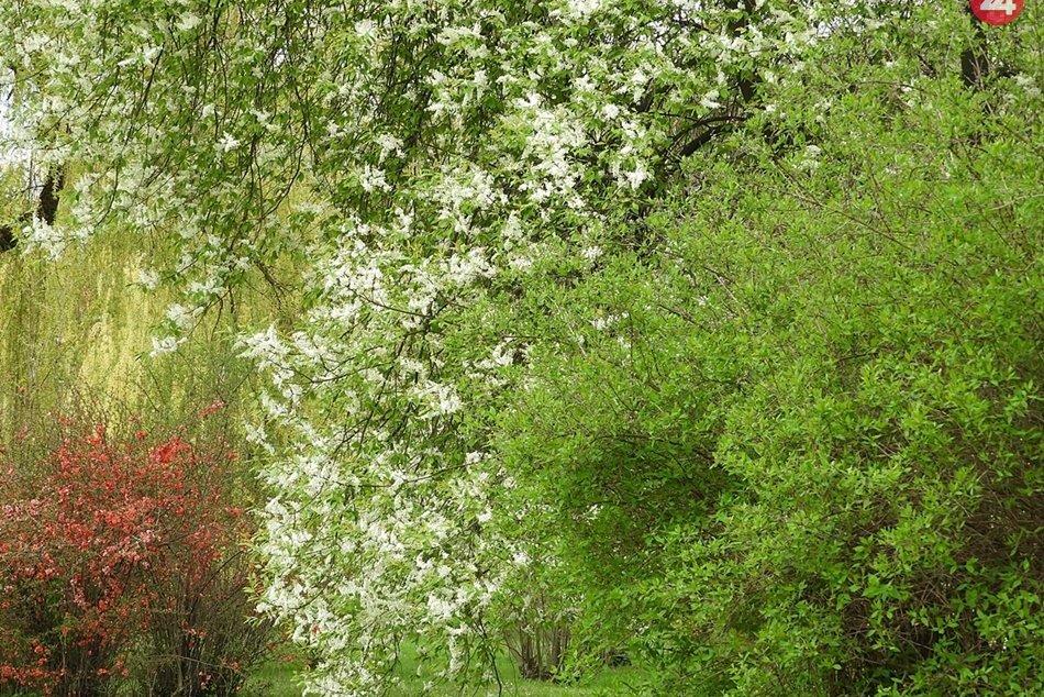 Obrazom: Rožňava rozkvitla do pestrých farieb