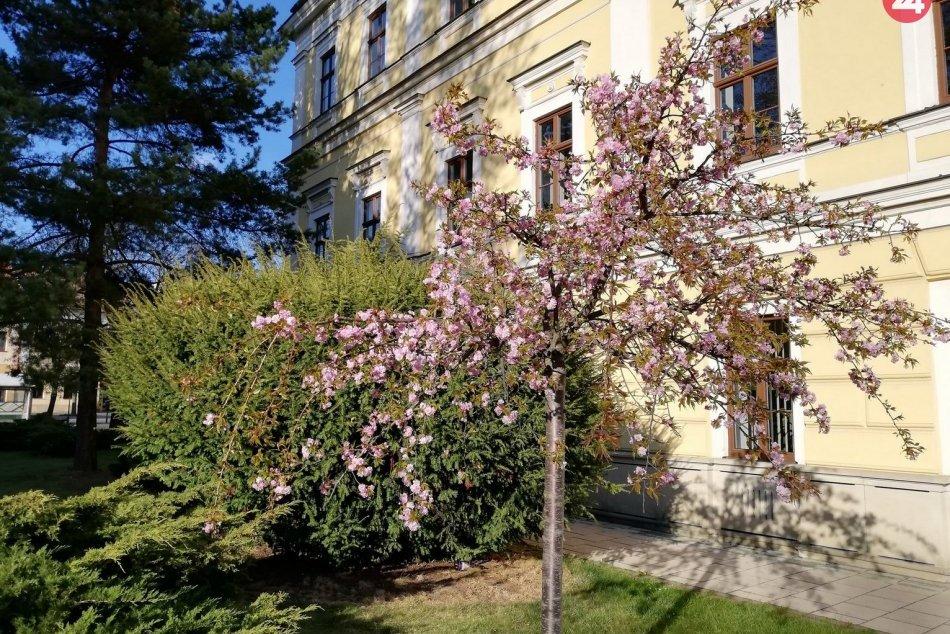 V Spišskej sa udomácnila jar: Aj takéto pekné výjavy v našom meste ponúka