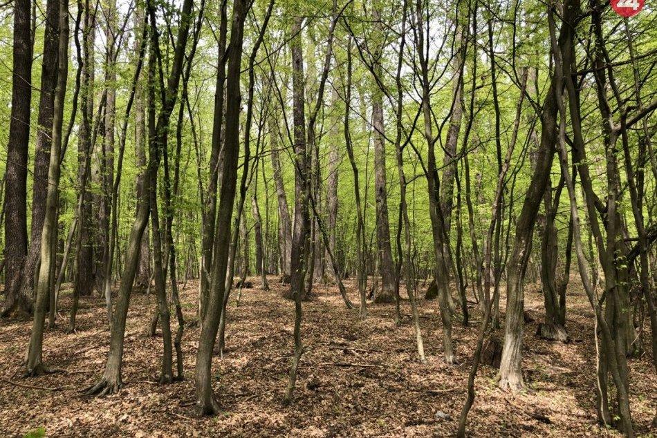Obec Kokošovce ležiaca pri Prešove? Spoznajte ju bližšie vďaka týmto záberom