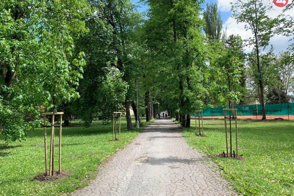 V OBRAZOCH: V bystrickom parku vysadili 42 nových stromov