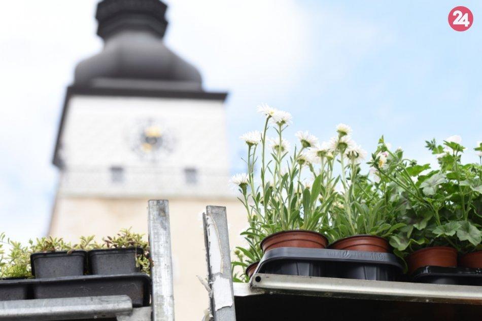 Májový kvet 2019