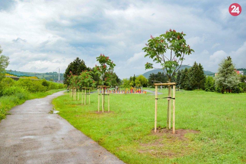 Výsadba stromčekov v Brezne