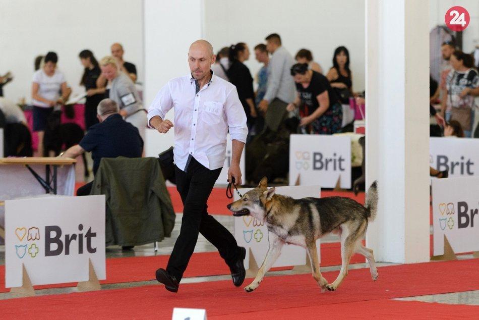 Na výstavisku v Nitre sa stretli chovatelia psov z 32 krajín, FOTO