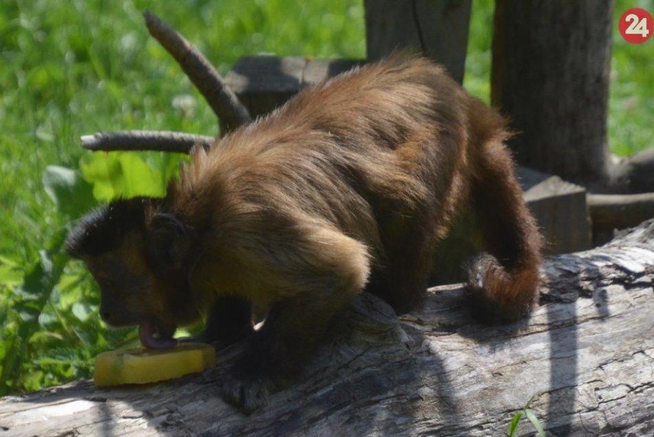 Ochladzovanie zvierat v zoo