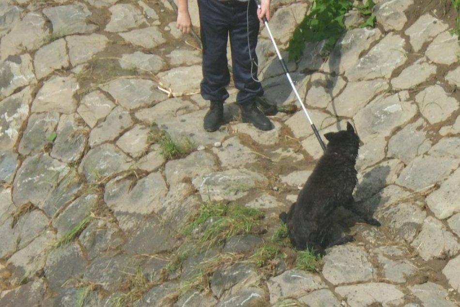 Vo vode bojoval o život: Psíka v Prešove zachránila mestská polícia