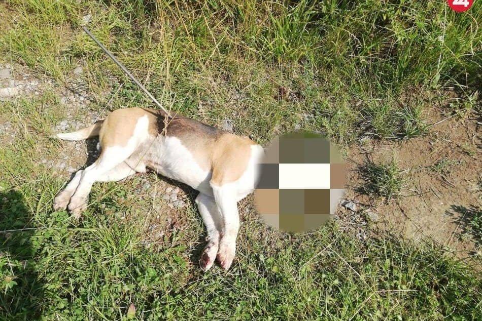 zastrelený pes Dzeky