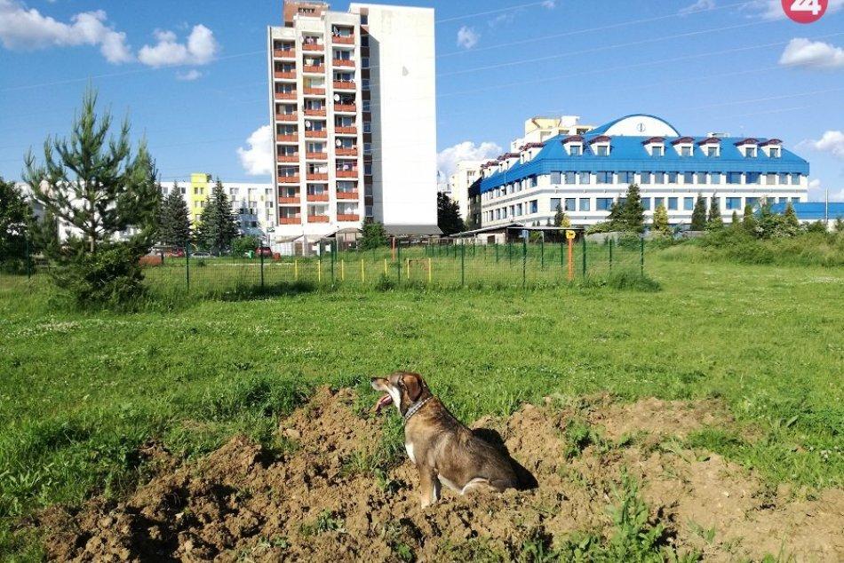 FOTO: Psa mal diviak napadnúť na lúke na Etape
