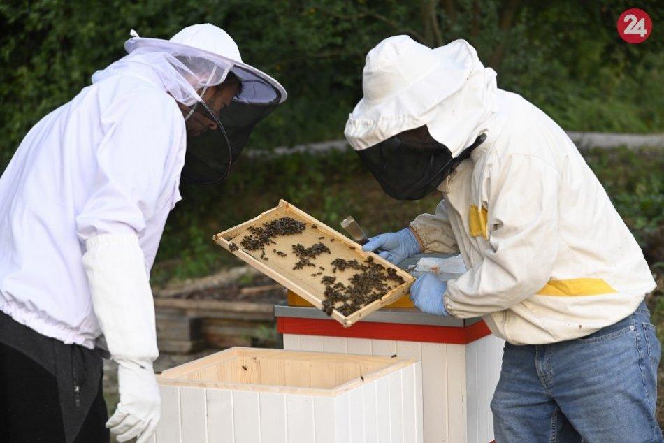 Začínajúci R. Kmeťo z T. Stankoviec sa zaúča od včelára T. Hanulíka z H. Súče
