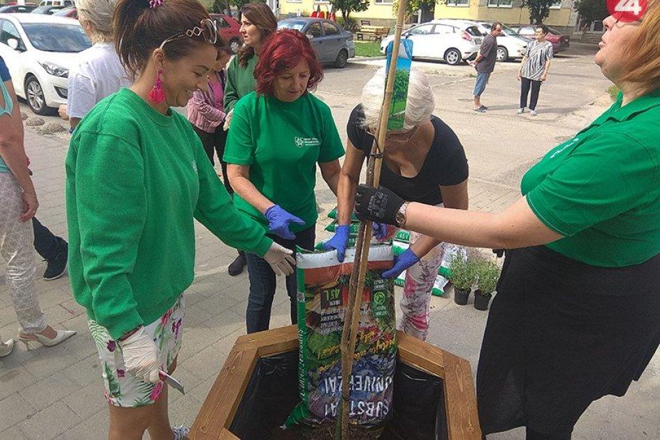 Výsadba zelene na Letomostí v Nových Zámkoch
